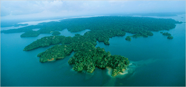 Photograph of Barro Colorado Island